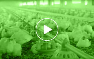Limpiezas Castor. 8_video_bioseguridad Videos